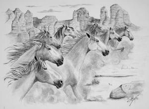 Save Mustangs From Extinction